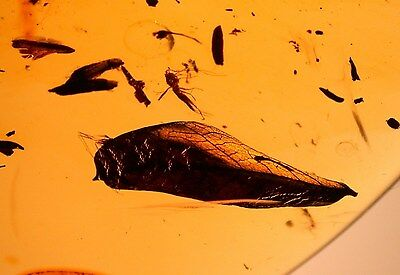 Super RARE 30 Botanicals with Strange Wasp in Authentic Dominican Amber Gemstone