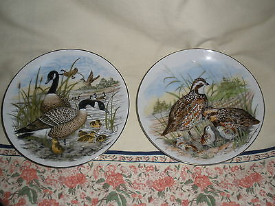 Outdoor Sports: Birds of the South  Plates: Canadian Geese & Bobtail Quails-Wow