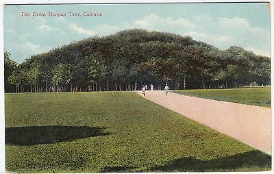 INDIA - Calcutta / Kolkata - The Great Banyan Tree - c1900s era postcard