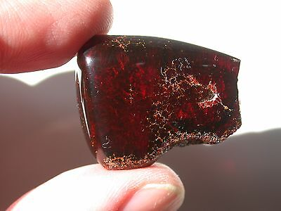 Blood RED Dominican AMBER Gemstones from Los CaCaos Mines RARE Large 12.7 g