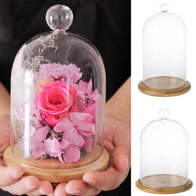 Glass Display Cloche Bell Jar Dome With Wooden Or Glass Base DIY Transparent