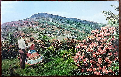 1964 Postcard Craggy Gardens Blue Ridge Parkway North Carolina