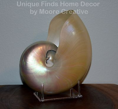 """Pearl Nautilus Shell 7""""- 7.5"""" Beach Seashell Pearlized Nautilus with Stand"""