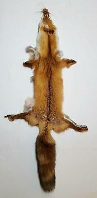 Red Fox Hide -Open Cut W/Tail -Tanned From Taxid'st-Great Table/Chair Display