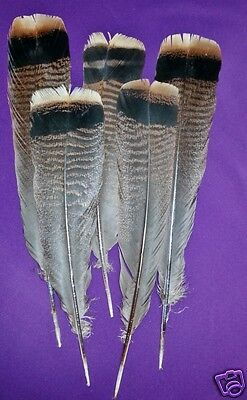12 - #2 RIO Grande Turkey Tail Feathers Great Quality-for Craft, Paint, Flies