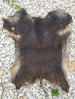 Wild Boar Hide - Scraped, Stretched & Dried - 4 Drum Cover, Raw Hide Or Leather