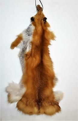 Red Fox Hide -Open Cut- NO Tail -Tanned- From Taxid'st- Craft Manuf or Display
