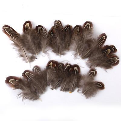 50pcs Pheasant Feathers for Craft Mask Hat 5-9cm