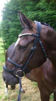 Double D Noseband , A Drop And Caverson in One ,Brilliant Design