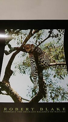 Leopard in a Tree  Picture Print