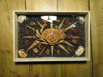 Crabs,sea Sand,agates & Shellfishs. Unique Resin Art. Embedded In  Wood Box
