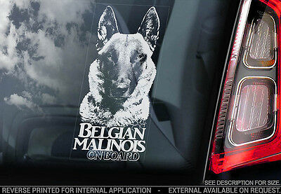Belgian Malinois - Car Window Sticker - Dog Sign -V17