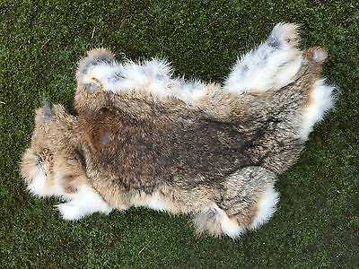 wild rabbit skin gundog training dogs spaniels labradors terriers dummy dog gun