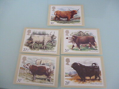 great britain 1984 PHQ Cards series 73 Cattle   set of 5