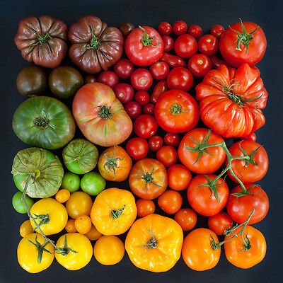 TOMATO SEEDS  / Choose between 85 varieties Heirloom Organic Seeds