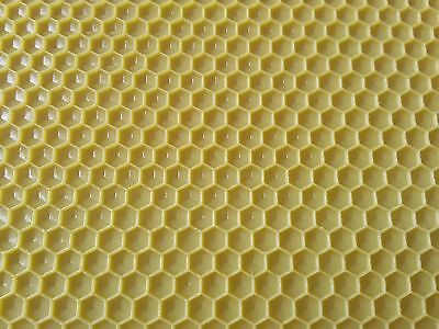 10 x Plastic Foundation 4 3/4'' x 16 3/4'' for beekeeping