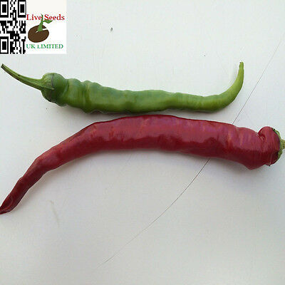 Hot Chilli Pepper Cayenne Red Capsicum Annuum 30 Finest Seeds – Vegetable