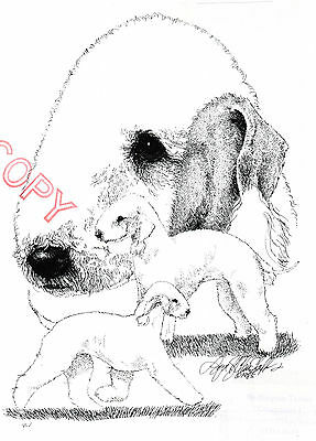 Bedlington Terrier Limited Edition Print by Lyn St.Clair