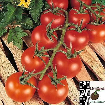 Tomato 'Shirley'20 Finest UK Crop Seeds