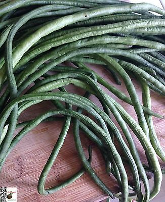 Indian Yard Long Bean-Lata 20 finest seeds