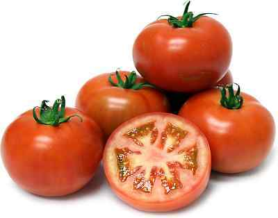 Tomato Seeds - COBRA - Large Fruit, Tasty Vegetable - Gmo Free - 10 Seeds