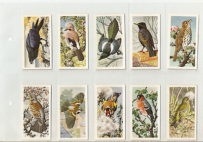 Brooke Bond - Set of Bird Portraits (No Address)