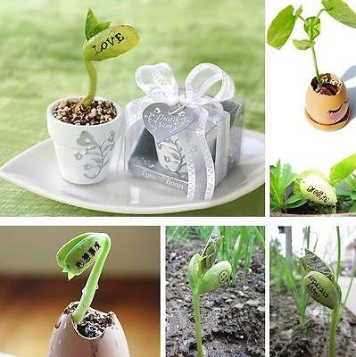 20pcs DIY Magic Message Beans Seeds Fun Love Gift Grow Your Own Word Message T