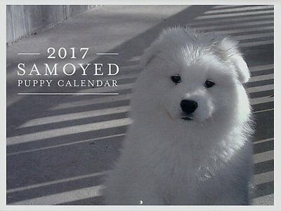 2017 Samoyed Puppy Calendar