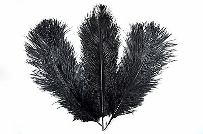 """Long Black Ostrich Feathers, Pack of 10 (Approx 10-12"""" Long)"""