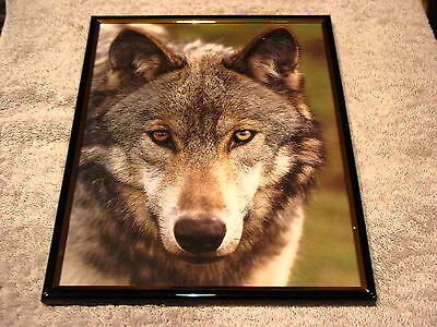 WOLF 8X10 FRAMED PICTURE #4 ( poster )