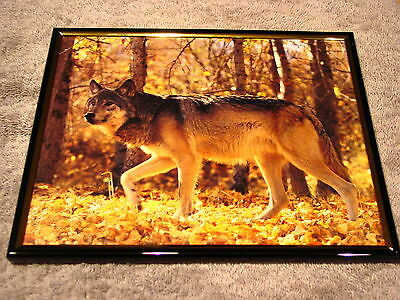 WOLF 8X10 FRAMED PICTURE #5 ( poster )