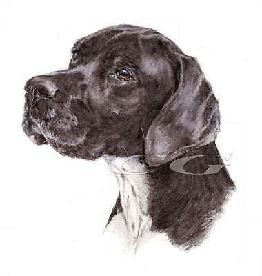 POINTER No5.       3 Blank Dog greeting cards by Christine Groves