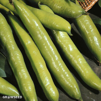 Aquadulce Claudia Broad Bean Seed - 50 Seeds - Sow NOW SEPT - MARCH