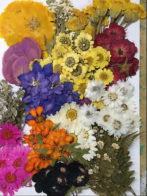 260pcs Mixed Pressed Dried Flowers Leaf Plant Herbarium For Jewelry Craft Making