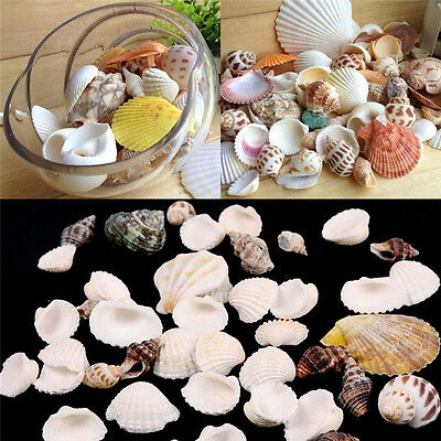 100g Mixed Beach SeaShells Mix Sea Shell Craft SeaShells Natural Aquarium Decor