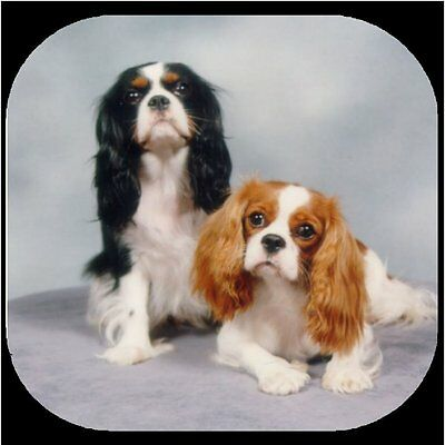 CAVALIER KING CHARLES SPANIEL Rubber Backed Coasters #0940