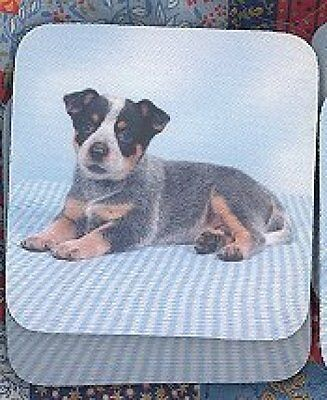 AUSTRALIAN CATTLE DOG Blue Rubber Backed Coasters #0888