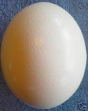 Ostrich Eggs Large - NEW YEAR Gift Ideas!
