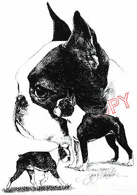 Boston Terrier Limited Edition Print by Lyn St.Clair