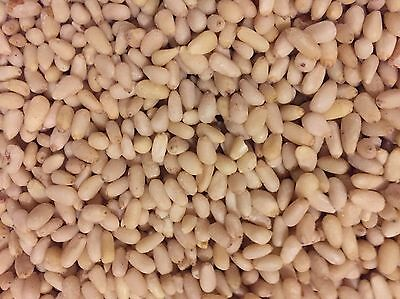 Pine Nuts 1kg (KERNELS) In Vacuum Bag Always Fresh Now New Price 17.5