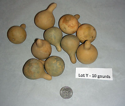 LOT OF 10 GREEN CLEANED SPINNER GOURDS - Great for Jewelry or Ornaments  (Lot Y)