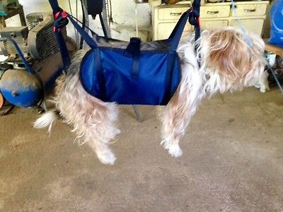 Harness Paragliding For Dog
