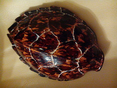 3 Dimensional Faux Turtle Shell Sculpture