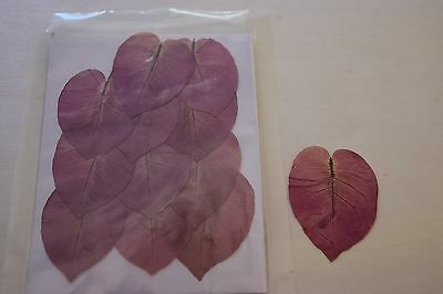 Dried Pressed Flowers; 12 Purple Bougainvillea, Laminated;Free Shipping
