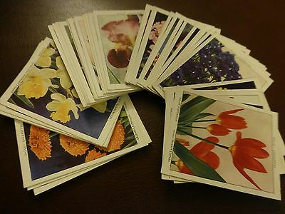 Wills Garden Flowers New Varieties A Series Of 40 Large Original Cards