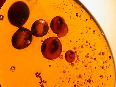 4 LARGE Enhydros with Ancient Sediment in Authentic Dominican Amber Gemstone