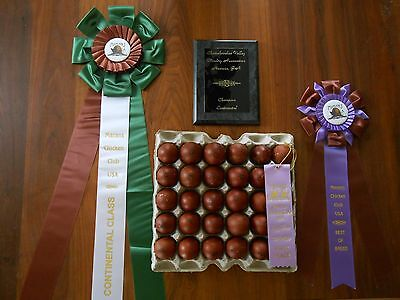 BLACK COPPER MARANS 12+ Hatching Eggs NPIP SHOW QUALITY BLOODLINES