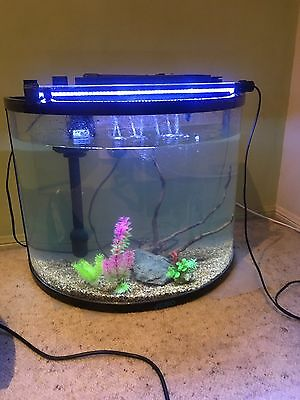 60 Litre Curved Glass Marine Tank