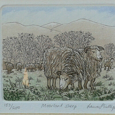 Moorland Sheep. Small framed limited edition etching by Laura Phillips.