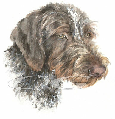 WIRE HAIRED POINTER.       3 Blank Dog greeting cards by Christine Groves